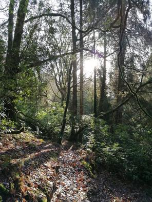 Aherlow woods
