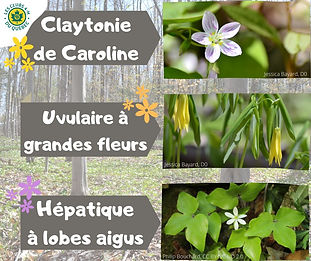 fleurs_printanières_1.jpg