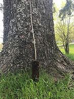 MAF-feuillu-racines-en-motte-1.jpg
