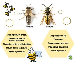 abeille_guêpe.png
