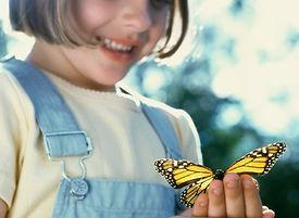Sens des insectes 2.jpg
