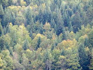 Den Wald beobachten