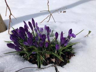 Erster Frühlingsschnee