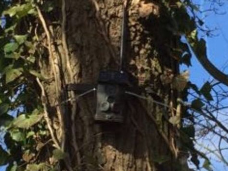 We fit cameras to monitor woodlands around clients house
