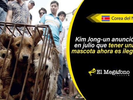 Norcoreanos son obligados a entregar a sus perros para que puedan ser consumidos