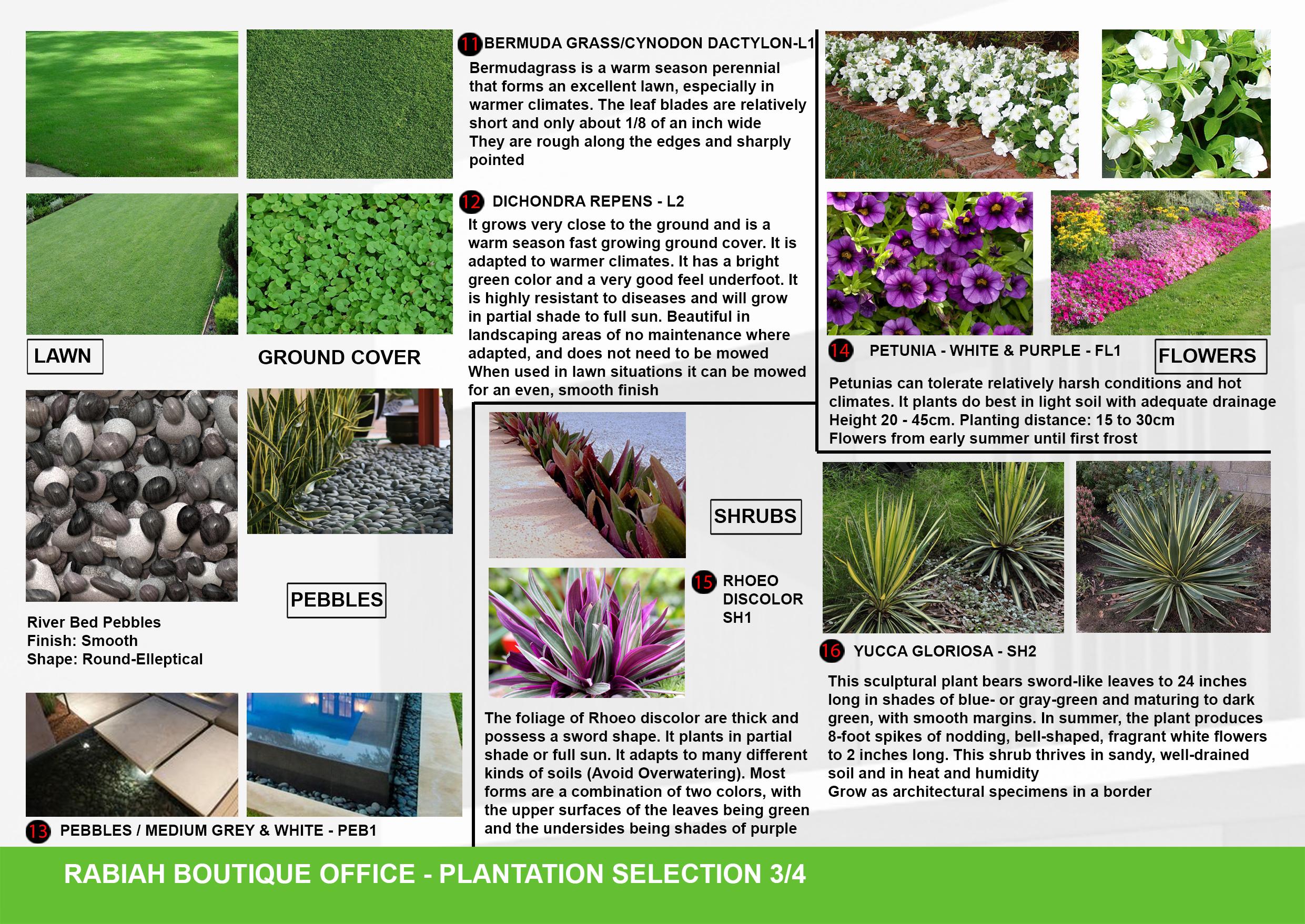 09-A3-Plantation Selection 03