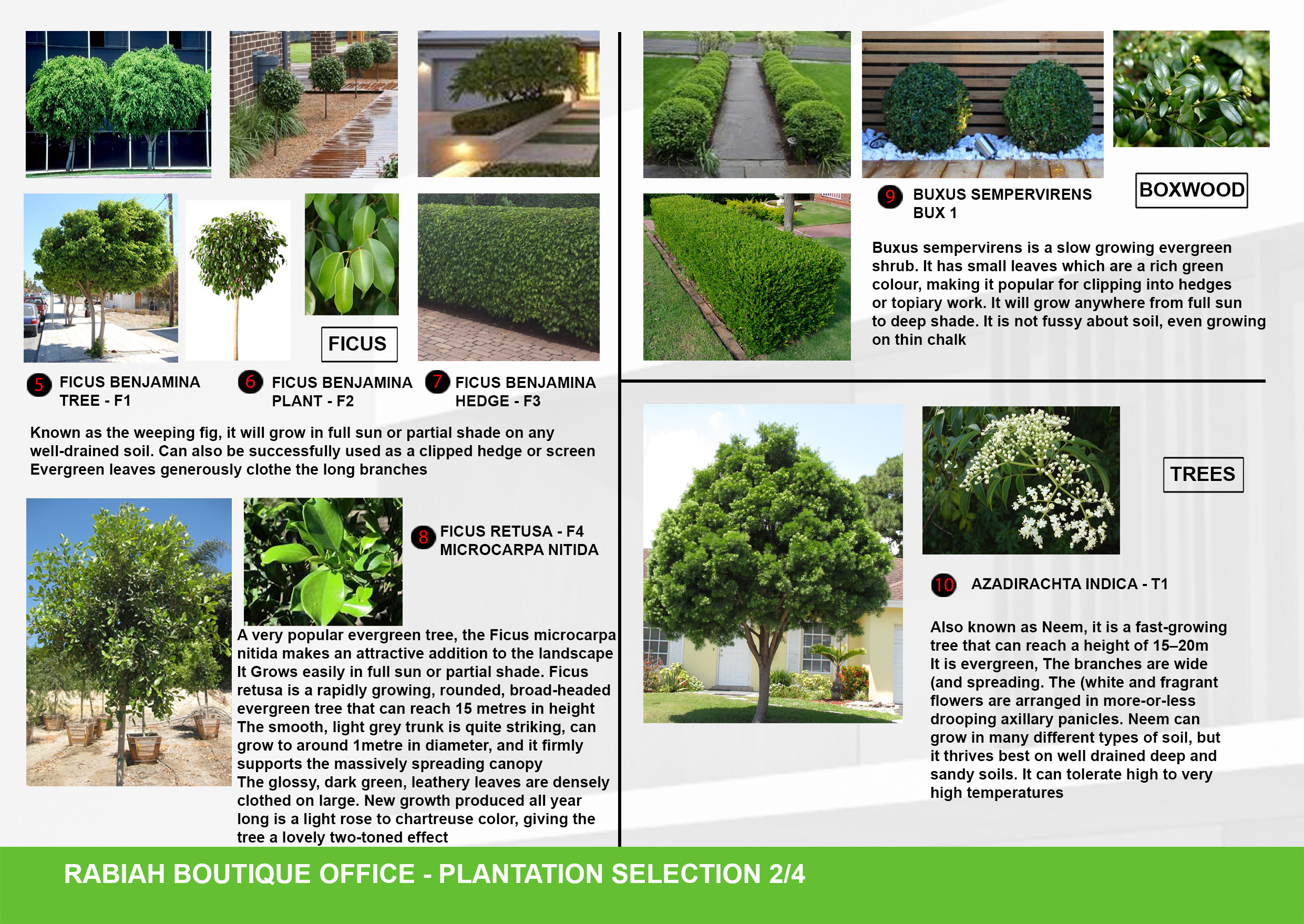 08-A3-Plantation Selection 02