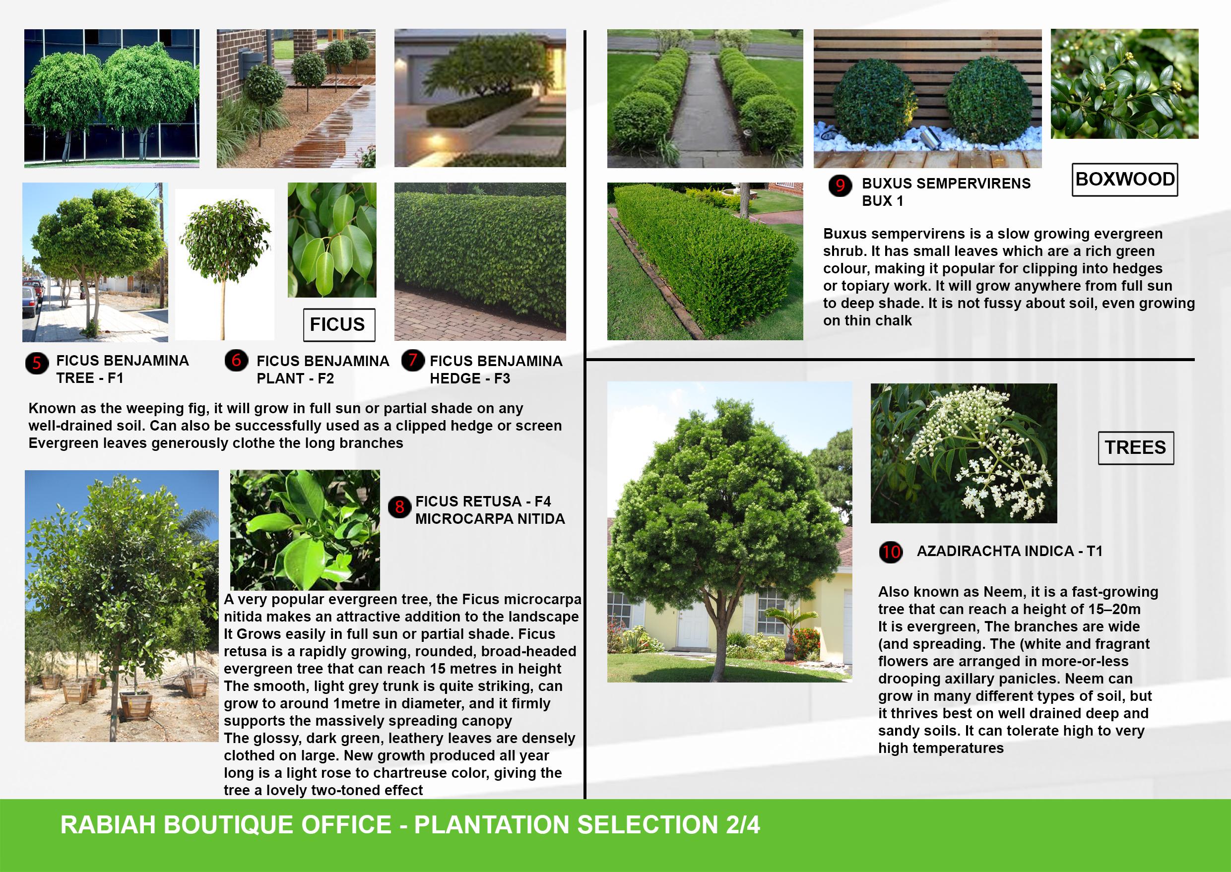08-A3-Plantation Selection 02