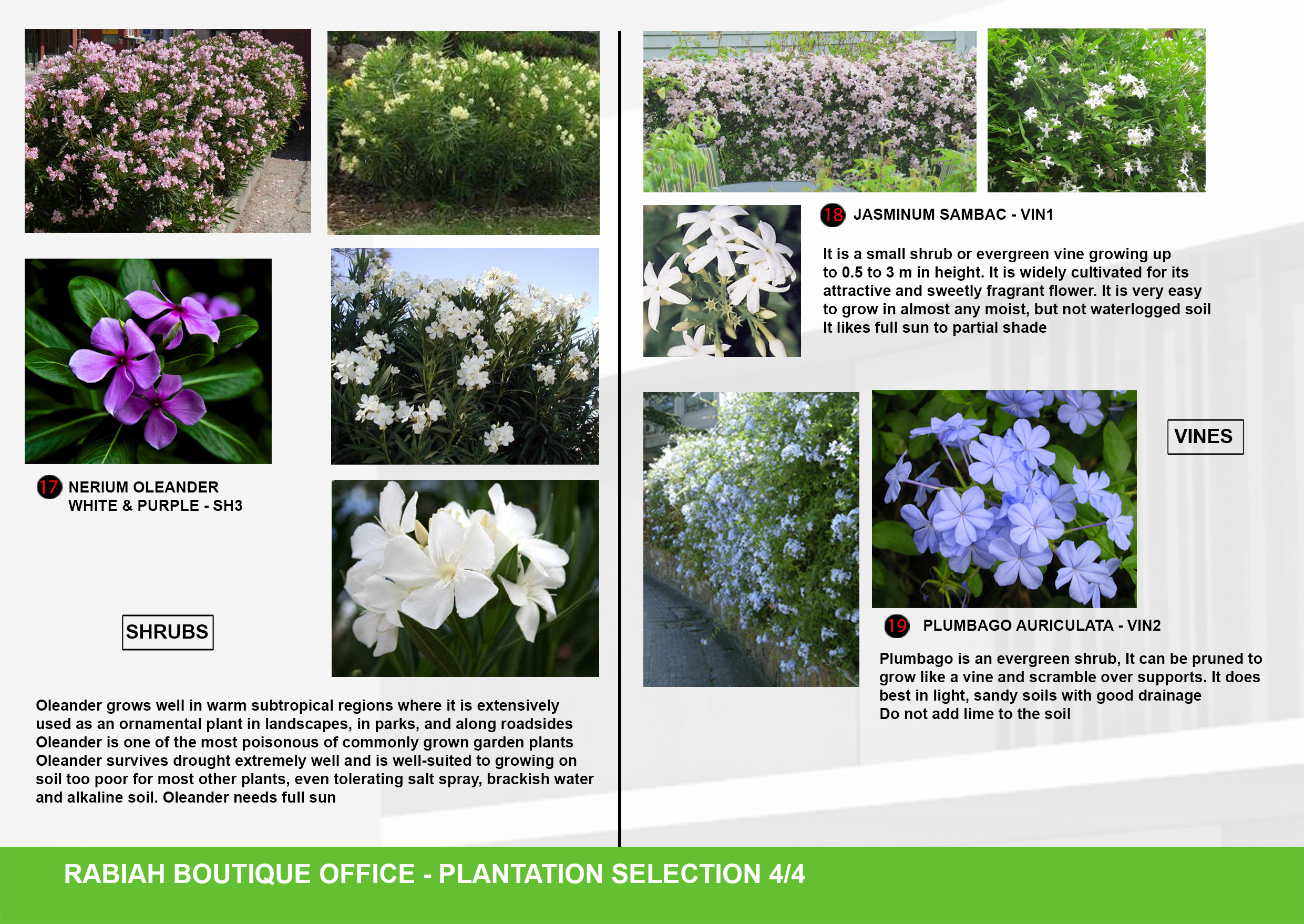 10-A3-Plantation Selection 04