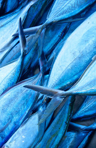 Jamaican Jackfish