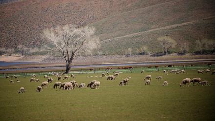 Eastern Sierra Nevada Foothills