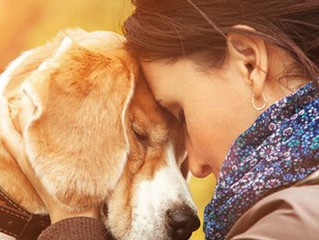 Grieving for Traumatic Pet Loss