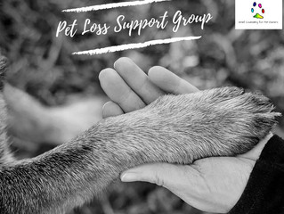 P - Pet Loss Support Group