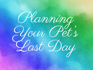 Planning Your Pet's Last Day