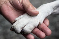 5 Things Veterinary Staff Wish You Knew Before Euthanizing