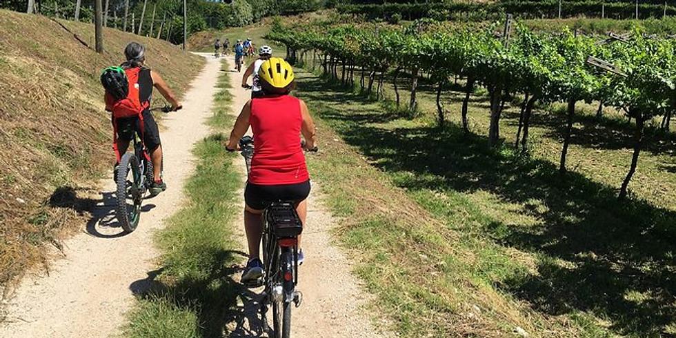 Bike & Wine nelle terre del Lugana