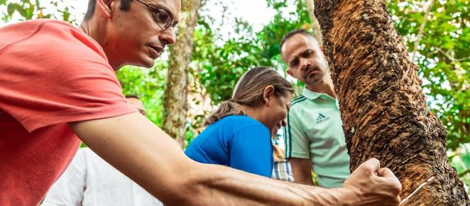 Amazônia: evento em Curitiba reúne especialistas para debater propostas para conciliar lucro e conse