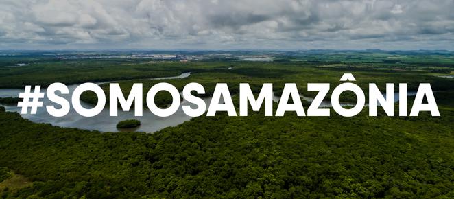 Dia Mundial da Amazônia: saiba como você pode contribuir