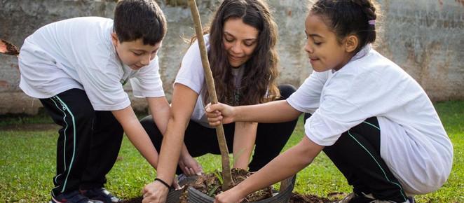 Projeto pretende plantar pelo menos 10 mil árvores em Curitiba