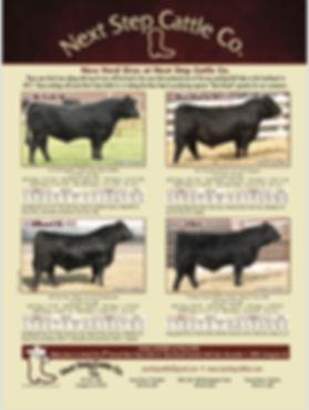 4 bulls.JPG