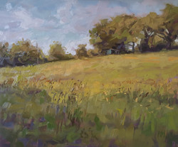 Summer Meadow By Paula Mitchell