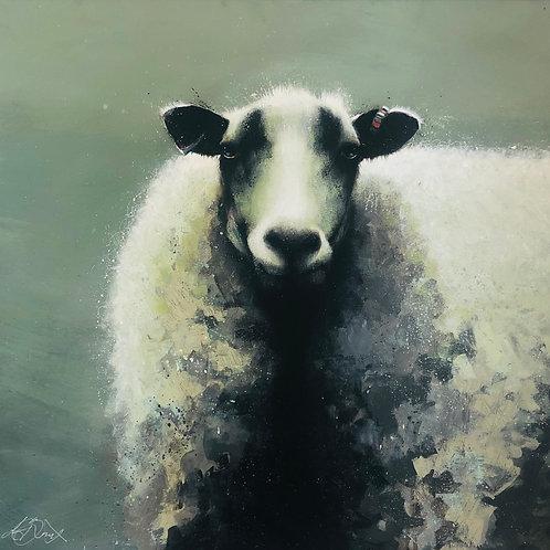 Sheepish By Sandra Binney