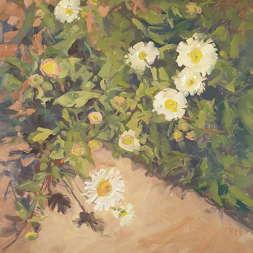 Daisies By The Door By Paula Mitchell