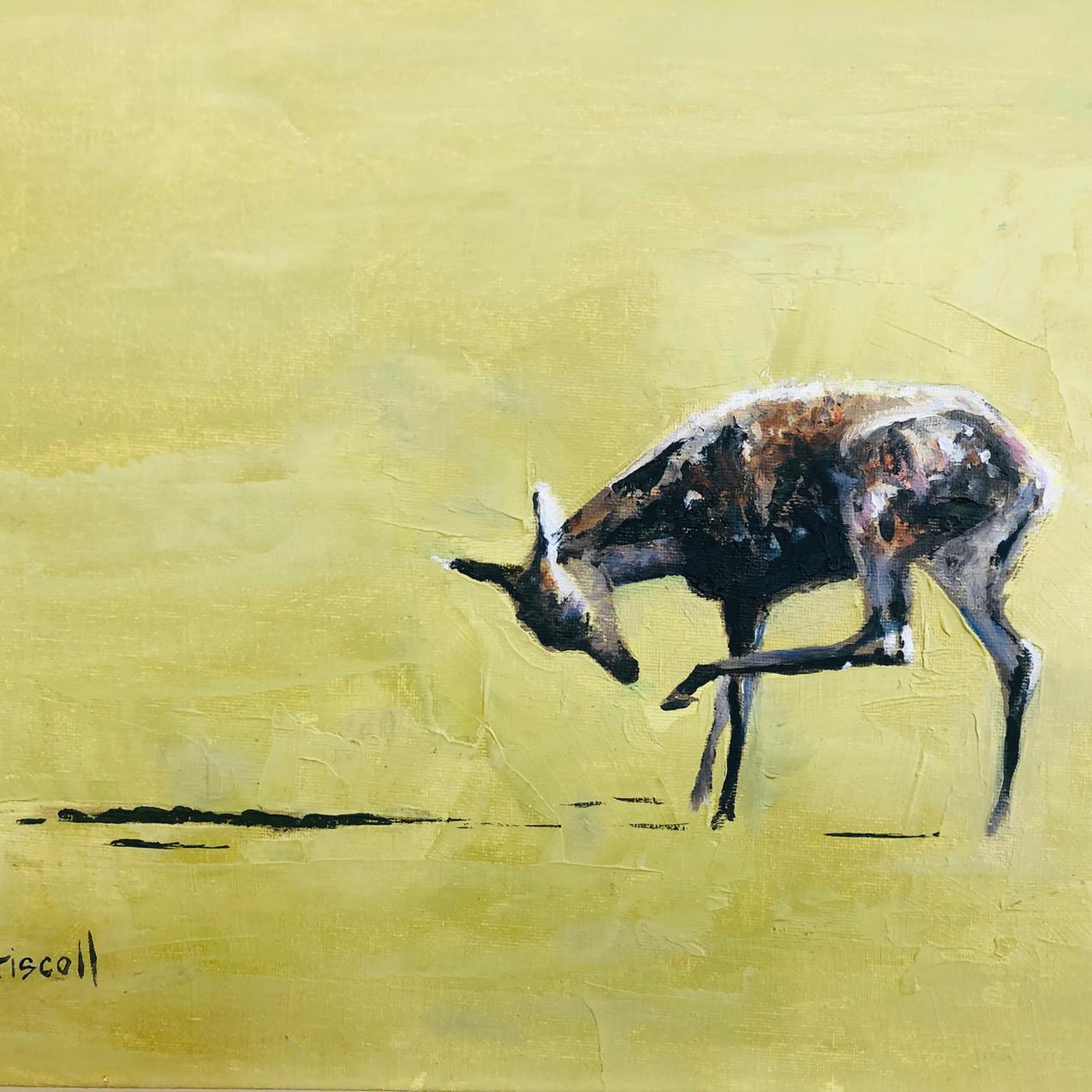 Penny Driscoll deer
