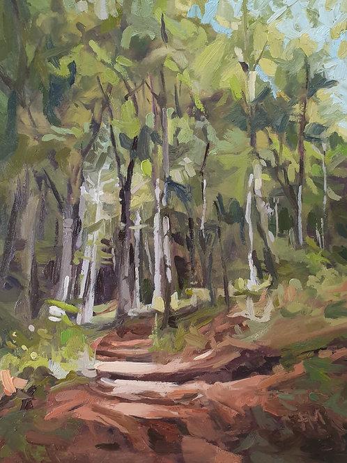 Woodland Canopy By Paula Mitchell