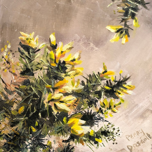 Sunlit Gorse By Penny Driscoll