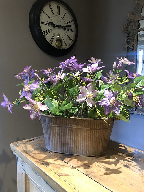 Purple Clematis in large tin trough