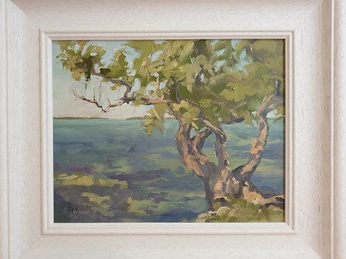 Buttonwood Tree By Paula Mitchell