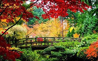 jardin japonais com.jpg
