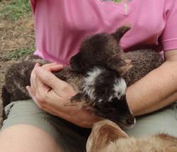 Lambs Belinda and Betina