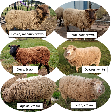 Sheep Pictures Rug.png