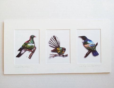 Mounted Trio NZ Natives Birds View - Sophie Blokker