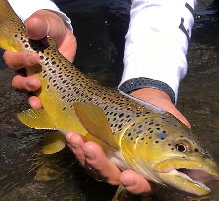 sierratroutdoorsman.com/lowerowens_guidedfishing_Flyfishing_mammothlakes