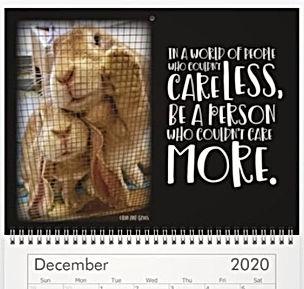12 December_edited.jpg