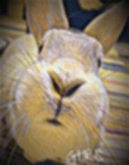 Georgia House Rabbit Society Expansion