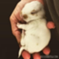 Baby Snuggle Monkey.jpg
