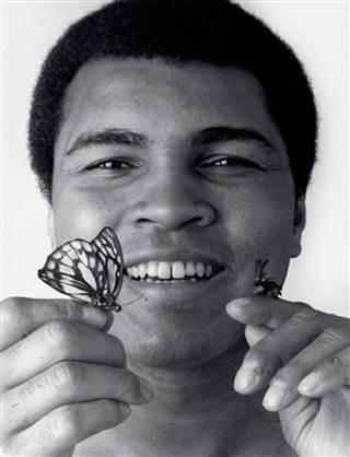 Ali bee & butterfly