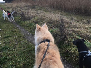 Social Walk - New Years Day, 2pm