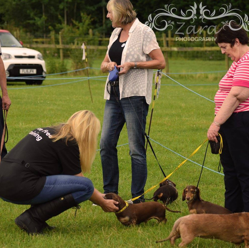 The red foundation fun dog show