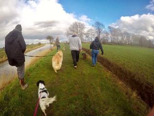 Our next social walk