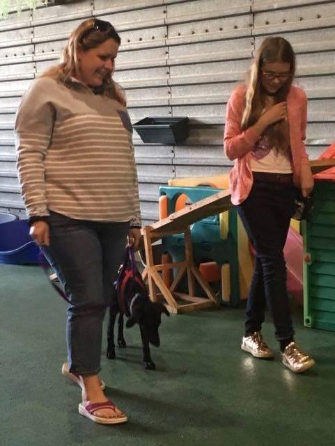 puppy life skills week 3