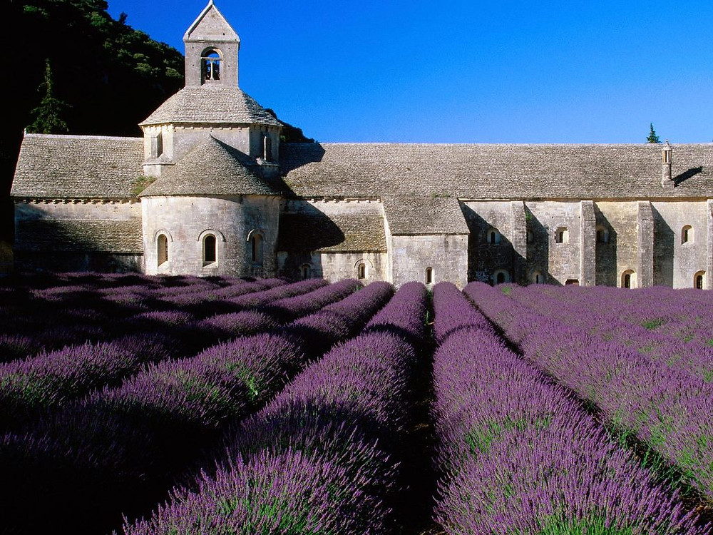 Lavender-fields-Provence-France_4