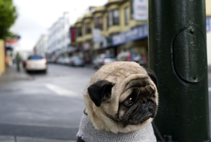 Sad-Puppy-4