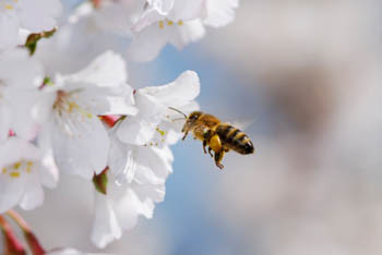 One Hit Wonders: Manuka Honey