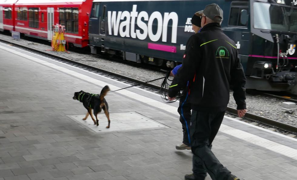 Mantrailing im Bahnhof Chur mit Peter von Sam Dogs