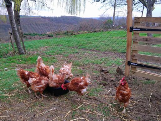 Bonjour les poulettes !